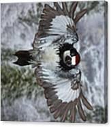 Male Acorn Woodpecker - Phone Case Design Canvas Print