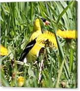 Male American Goldfinch Camouflage Canvas Print