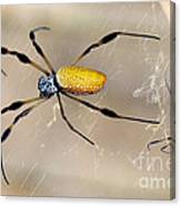 Male And Female Golden Silk Spiders Canvas Print