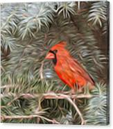 Male Cardinal In Spruce Tree Canvas Print