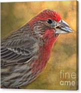 Male Finch With Seed Canvas Print