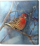 Male House Finch With Blue Texture Canvas Print