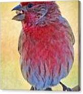 Male Housefinch - Digital Paint Canvas Print