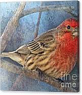 Male Housefinch Close View Canvas Print