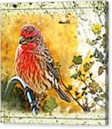 Male Housefinch Photoart Canvas Print