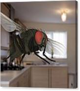 Male Lesser Housefly In Flight, Sem Canvas Print