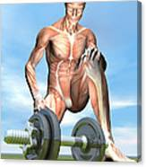 Male Musculature Looking At A Dumbbell Canvas Print