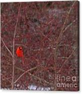 Male Red Cardinal In The Snow Canvas Print