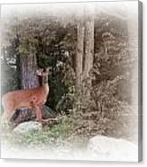Male Whitetail Deer Canvas Print