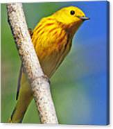 Male Yellow Warbler Canvas Print