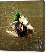 Mallard Bath Time Canvas Print