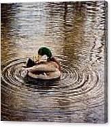 Mallard Duck Canvas Print