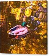 Mallard Duck On Pond 1 Canvas Print
