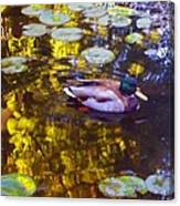 Mallard Duck On Pond 2 Canvas Print