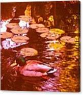 Mallard Duck On Pond 3 Square Canvas Print