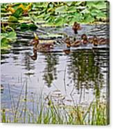 Mallard Ducks In Heron Pond In Grand Teton National Park-wyoming  Canvas Print