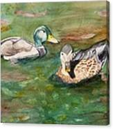 Mallard Ducks With Spawning Salmon Canvas Print