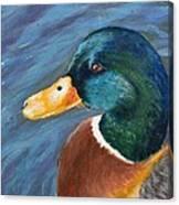 Mallard Canvas Print