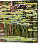 Mallard Pond Canvas Print