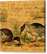Mallards And Swan Collage Canvas Print
