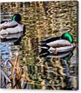 Mallards In The Reeds Canvas Print