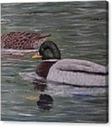 Mallards On Holloway Cove Canvas Print