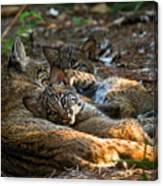 Mama And Her Babies  Canvas Print