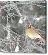 Mama Cardinal Canvas Print