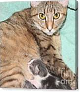Mama Cat And Her Kittens Canvas Print