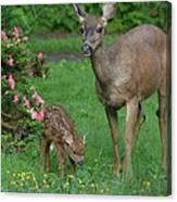 Mama Deer And Baby Bambi Canvas Print