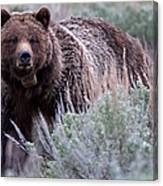 Mama Grizzly Canvas Print