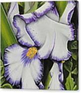Mama's Favorite Iris Canvas Print