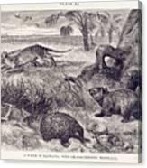 Mammals Of Tasmania Canvas Print