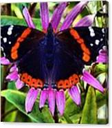 Mammoth Butterfly Canvas Print