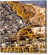 Mammoth Hot Spring Canvas Print