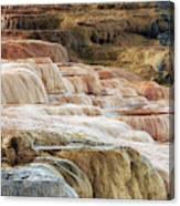 Mammoth Hot Springs Terracaes Canvas Print
