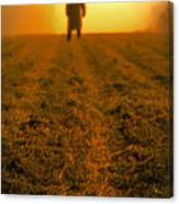 Man In Field At Sunset Canvas Print
