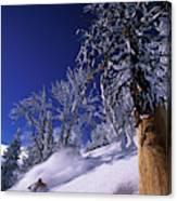 Man Skiing Through Trees In Fresh Canvas Print