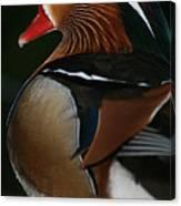 Mandarin Duck On Guard Canvas Print