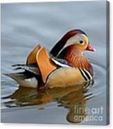 Mandarin Duck Swimming Canvas Print