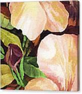 Mandevilla Canvas Print