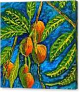 Mangoes Delight Canvas Print