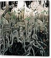 Mangrove Aerial Roots Canvas Print