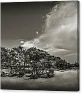 Mangrove At Low Tide Canvas Print