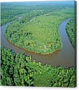 Mangrove Forest In Mahakam Delta Canvas Print