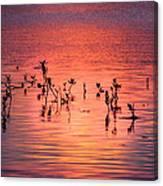 Mangrove Paradise Canvas Print