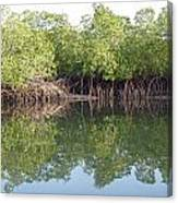 Mangrove Refelections Canvas Print