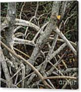 Mangrove Roots 1 Canvas Print