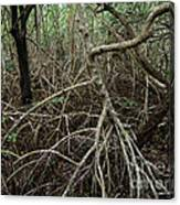 Mangrove Roots 2 Canvas Print
