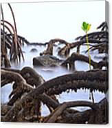 Mangrove Tree Roots Detail Canvas Print